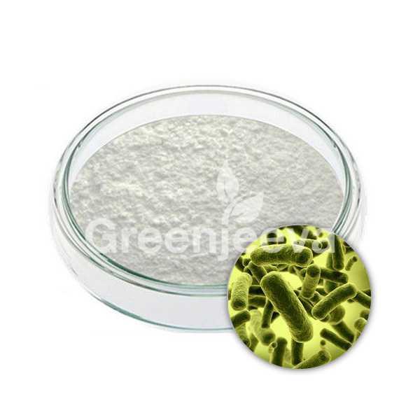 Lactobacillus bulgaricus powder 50  B CFU/G