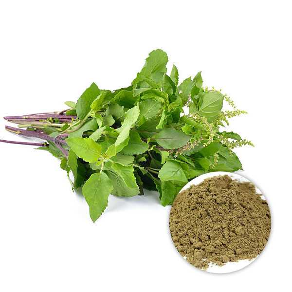 Organic Holy Basil Leaves Powder