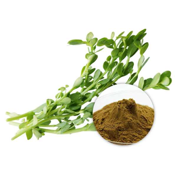 Bacopa Monnieri Extract Powder 20% Bacosides