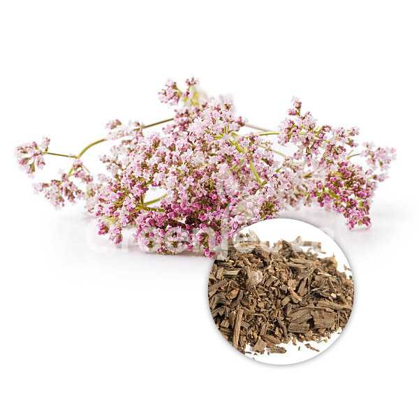 Organic Valerian Extract Powder 4:1