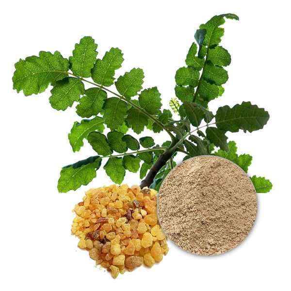 Boswellia Extract Powder 65 % boswellic acid,  Titrimetry