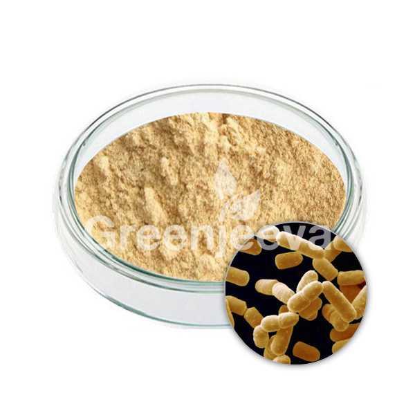 Lactobacillus salivarius powder 300 B CFU/G