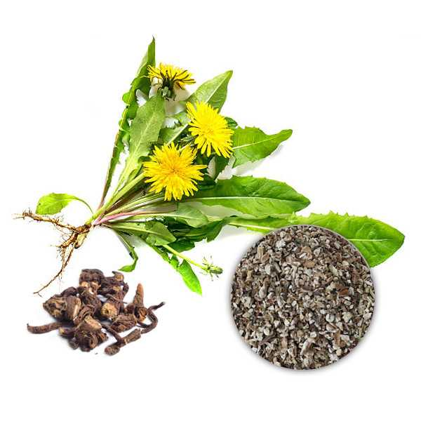 Dandelion Root Extract Powder 4% Flavones, UV