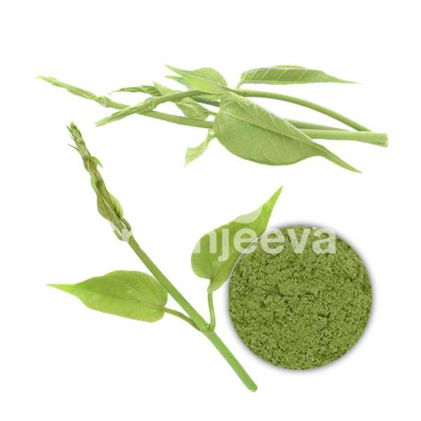 Organic Gymnema Sylvestre Leaf Powder