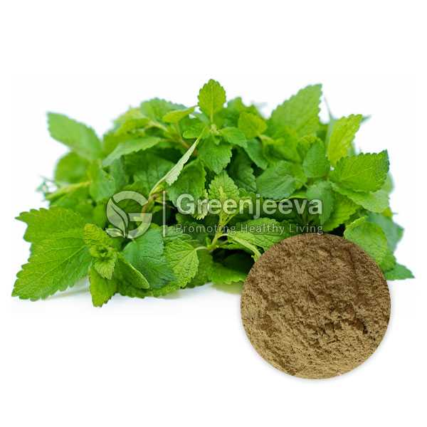 Lemon Balm Extract Powder 10:1