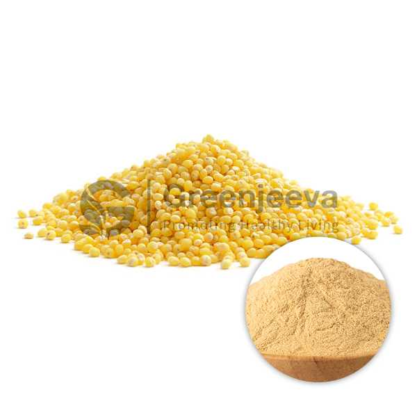 Millet Extract Powder 10:1