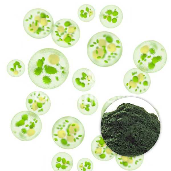 Organic Chlorella Powder, Cracked Cell