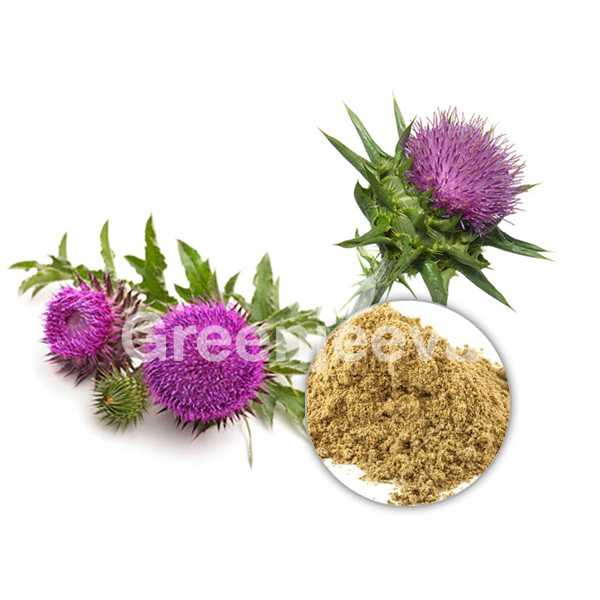 Organic Milk Thistle Extract Powder 80% Silymarin UV