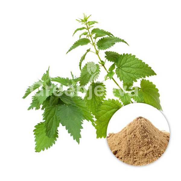 Organic Nettle Extract Powder 10:1