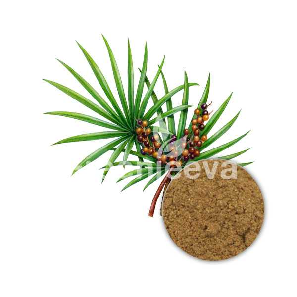 ORGANIC SAW PALMETTO FRUIT POWDER