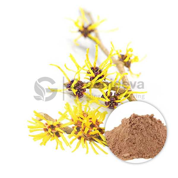 Witch Hazel Extract Powder 10:1 TLC