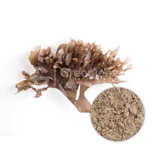 Organic Irish Moss Powder