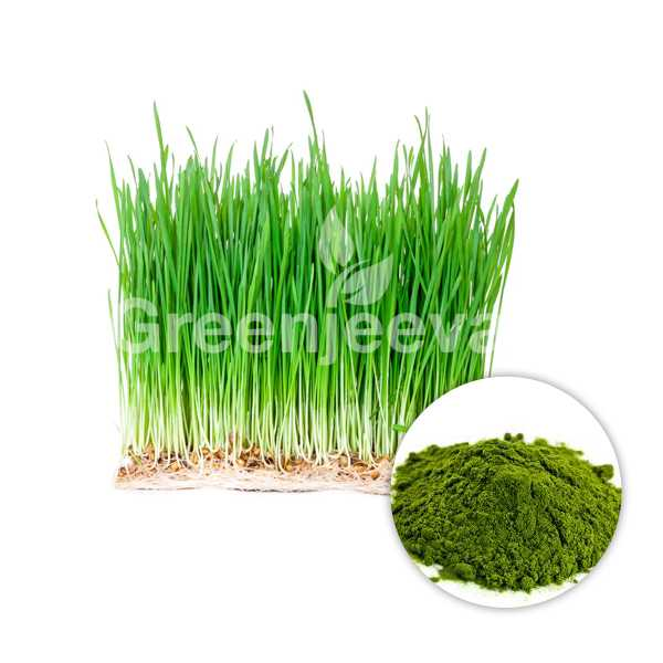 Organic Oat Grass Powder