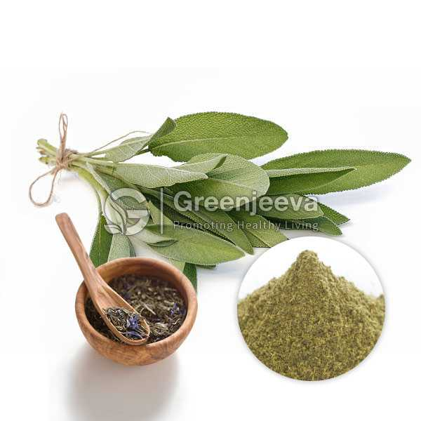 Sage Leaf Extract Powder 4:1