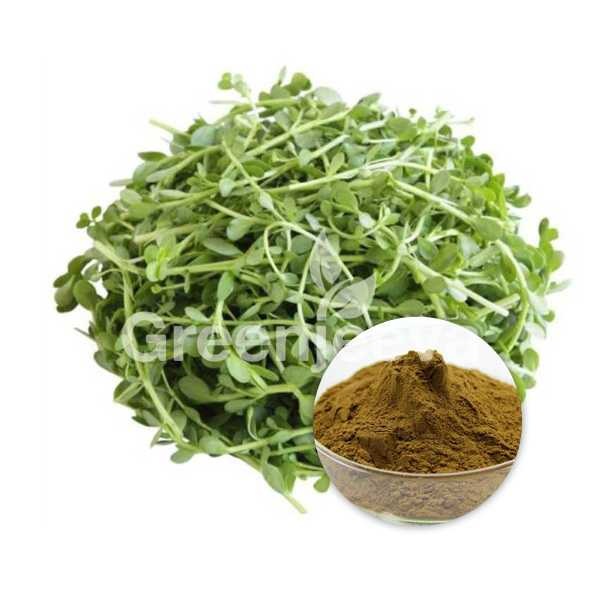 Bacopa Extract Powder 20% Bacosides, HPLC