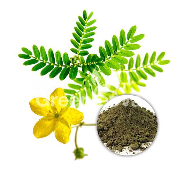 Tribulus terrestris Extract Powder 40% Total Saponins UV